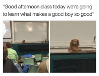 """Funny, Afternoon, and Good Boy: """"Good afternoon class today we're going  to learn what makes a good boy so good""""  Find Them 😂"""