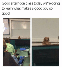 Dank Memes, Gem, and Professor: Good afternoon class today we're going  to learn what makes a good boy so  good  ind Them  IG: a Shit headsteve Finally a professor who has my attention - thanks for this gem @weratedogs