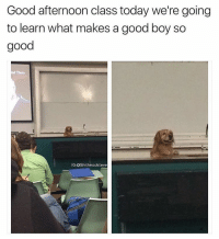 Funny, Afternoon, and Good Boy: Good afternoon class today we're going  to learn what makes a good boy so  good  nd Them  IGOShitheadsteve