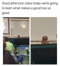 Memes, 🤖, and Afternoon: Good afternoon class today we're going  to learn what makes a good boy so  good  IG:OShitheadsteve