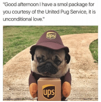 """😂😂Cute AF: """"Good afternoon have a smo package for  you courtesy of the United Pug Service, it is  unconditional love.""""  UPS 😂😂Cute AF"""