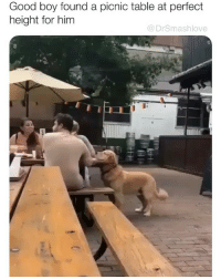 Brb gonna watch lil homie's large, luxuriant tail wagging regally on repeat whilst laying in bed for a while gnight 😍😂😂: Good boy found a picnic table at perfect  height for him  @DrSmashlove Brb gonna watch lil homie's large, luxuriant tail wagging regally on repeat whilst laying in bed for a while gnight 😍😂😂