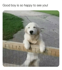 Bless Up, Dogs, and Love: Good boy is so happy to see you! Eid Mubarak beloveds! 🌙 I urge all of u to check out the awesome work being done by the good folks at @animalsanctuary_tangier - the video I posted a couple weeks ago of dogs playing while supported by doggie wheelchairs was posted by them - those babies are being taken care of by them and they're an awesome little organization saving doggies in Morocco. Check them out! Love y'all! Bless up! ❤️