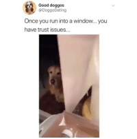 Crying, Memes, and Omg: Good doggos  @DoggoDating  Once you run into a window...you  have trust issues... omg i'm crying, this poor sweet pup 😭 (@doggodating on Twitter)