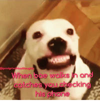 Memes, Phone, and Girl: @good girl wit  When boe walks h and  checking  Catche  his phone *act natural* Oh hey 😬 goodgirlwithbadthoughts 💅🏻