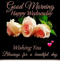 happy wednesday: Good  Happy  Wednesday  Wishing You  Blessings a beautiful day