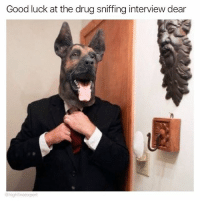 Lmao, Weed, and Good: Good luck at the drug sniffing interview dear  @high fiveexpert Lmao @highfiveexpert