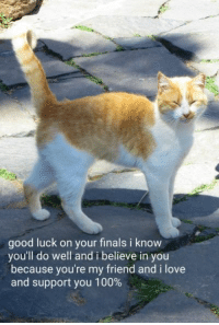 love-and-support: good luck on your finals i know  you'll do well and i believe in you  because you're my friend and i love  and support you 100%