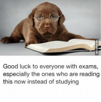 For those who have finals this week. 😘 engineering engineer goodluck finals exam engineeringexam college futureengineer studying @engineering_republic @engineering_technologies: Good luck to everyone with exams,  especially the ones who are reading  this now instead of studying For those who have finals this week. 😘 engineering engineer goodluck finals exam engineeringexam college futureengineer studying @engineering_republic @engineering_technologies