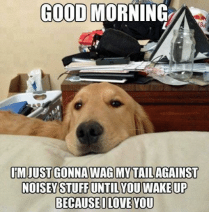 My Golden does this to me all the time. via /r/wholesomememes https://ift.tt/2Xw9Tai: GOOD MORNING  Bu  IMJUST GONNA WAG MY TAILAGAINST  NOISEY STUFF UNTIL YOU WAKE UP  BECAUSEILOVE YOU My Golden does this to me all the time. via /r/wholesomememes https://ift.tt/2Xw9Tai