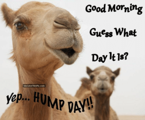 Meme, Good Morning, and Coffee: Good Morning  GuessWhat  Day lt1s?  via LoveThisPic.com  ep.. HUMP DA Wacky Wednesday Coffee Meme