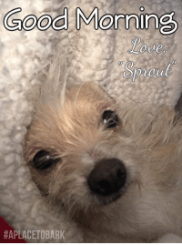 "Memes, Survivor, and Sprouts: Good Morning  HAPLA How cold is it where you are? Little ""Sprout"" is a Puppymill survivor. She had a rough start to life, but over the past 7 months has worked through many issues. She is now adopted & will be in her new home soon💕 Sweetest little face... I dream of a day, that the cruelty of puppymills is no more.  #everylifematters #aplacetobark #lovewins"