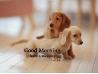 Have a great day everyone: Good Morning  have a nice day Have a great day everyone