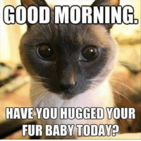 Cute, Memes, and Good Morning: GOOD MORNING  HAVE YOU HUGGED YOUR  FUR BABY TODAY? For more cute pics LIKE us at The Purrfect Feline Page