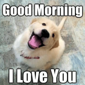 Animals, Dogs, and Love: Good Morning  I Love You Dog Memes Of The Day 30 Pics – Ep53 #animalmemes #dogmemes #memes #dogs - Lovely Animals World