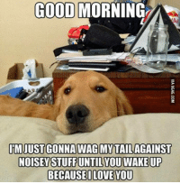 Dank, 🤖, and Dog: GOOD MORNING  IIM JUST GONNA WAG MY TAIL AGAINST  NOSEMSTUFFUNTIL YOU WAKE UP  BECAUSE I LOVE YOU Dog owners can relate http://9gag.com/gag/a9P6rnW?ref=fbp