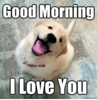 "<p>Quick! Post wholesome good morning memes so that other redditors wake up to something joyful via /r/wholesomememes <a href=""http://ift.tt/2o5DOYt"">http://ift.tt/2o5DOYt</a></p>: Good Morning  Love You <p>Quick! Post wholesome good morning memes so that other redditors wake up to something joyful via /r/wholesomememes <a href=""http://ift.tt/2o5DOYt"">http://ift.tt/2o5DOYt</a></p>"