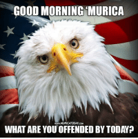 Every day I wake up like...  Follow us for more: Murica Today: GOOD MORNING MURICA  WHAT ARE YOU OFFENDED BY TODAYp Every day I wake up like...  Follow us for more: Murica Today