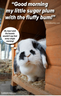 """Morning greetings! Do you greet your bunnies by calling them a funny nickname or singing them a little song? www.best4bunny.com: """"Good morning  mylittle sugar plum  with the fluffy bum!""""  Best 4bunny.com  Oh, howl Wish  the hoomin  wouldn't say that  every single  morning! Morning greetings! Do you greet your bunnies by calling them a funny nickname or singing them a little song? www.best4bunny.com"""