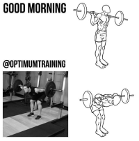 GOOD MORNING Main Muscle: Lower Back Secondary Muscles: Glutes, Hamstrings Exercise Type: Isolation, Pull Equipment Required: Barbell, Weight Plates The good morning is a great weight training exercise for your lower back as well as your glutes (gluteus maximus, gluteus medius, and gluteus minimus) and hamstring muscle groups. The good morning is often used as an assistance exercise to help improve the deadlift and squat by strengthening the core. This good morning variation, which uses a barbell, is the most popular. Instructions: 1⃣ Start with a barbell across your shoulders behind your neck. You should be standing up straight with your abs tensed to support your back and your arms on each side of your head balancing the bar. 3⃣ Inhale and lower your torso until it is parallel with the floor by bending at the hips while keeping your legs stationary and your back straight. Make sure your back and knees are as straight as possible. 3⃣ Hold this bottom position for a moment then slowly raise yourself back to the starting position by bending at the hips and raising your head. Tips: 1⃣ Start with the barbell on a squat rack so you can easily get the barbell into the starting position. 2⃣ Begin with a very small amount of weight and increase as you feel more comfortable with the lift. 3⃣ Keep your back straight throughout the lift and try to bend your knees as little as possible. 4⃣ Keep your head up at all times as looking down will get you off balance and also maintain a straight back. OptimumTraining: GOOD MORNING  @OPTIMUMTRAINING GOOD MORNING Main Muscle: Lower Back Secondary Muscles: Glutes, Hamstrings Exercise Type: Isolation, Pull Equipment Required: Barbell, Weight Plates The good morning is a great weight training exercise for your lower back as well as your glutes (gluteus maximus, gluteus medius, and gluteus minimus) and hamstring muscle groups. The good morning is often used as an assistance exercise to help improve the deadlift and squat by strengthening the core. This good morning variation, which uses a barbell, is the most popular. Instructions: 1⃣ Start with a barbell across your shoulders behind your neck. You should be standing up straight with your abs tensed to support your back and your arms on each side of your head balancing the bar. 3⃣ Inhale and lower your torso until it is parallel with the floor by bending at the hips while keeping your legs stationary and your back straight. Make sure your back and knees are as straight as possible. 3⃣ Hold this bottom position for a moment then slowly raise yourself back to the starting position by bending at the hips and raising your head. Tips: 1⃣ Start with the barbell on a squat rack so you can easily get the barbell into the starting position. 2⃣ Begin with a very small amount of weight and increase as you feel more comfortable with the lift. 3⃣ Keep your back straight throughout the lift and try to bend your knees as little as possible. 4⃣ Keep your head up at all times as looking down will get you off balance and also maintain a straight back. OptimumTraining