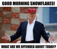 America, Memes, and Savage: GOOD MORNING SNOWFLAKES!  FA  CREAT  WHAT ARE WE OFFENDED ABOUT TODAY? 😂😂😂 liberal maga conservative constitution like follow presidenttrump resist stupidliberals merica america stupiddemocrats donaldtrump trump2016 patriot trump yeeyee presidentdonaldtrump draintheswamp makeamericagreatagain trumptrain triggered Partners --------------------- @too_savage_for_democrats🐍 @raised_right_🐘 @conservativemovement🎯 @millennial_republicans🇺🇸 @conservative.nation1776😎 @floridaconservatives🌴
