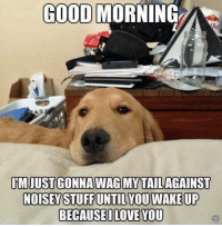 Good Morning, Good, and You: GOOD MORNING  UMJUST GONNA WAG MYTAILAGAINST  BECAUSEILOVE YOU