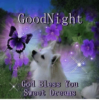 sweet dreams: Good Night  God Bless You  Sweet Dreams