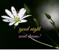 sweet dreams: good night  sweet  dreams