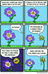 Alive, Ass, and Dank: GOOD SOIL, WARM SUN, FRESH  IT TAKES A LOT OF SPECIAL CARE  WATER, AND A LOT OF LOVE...  TO KEEP LITTLE OL ME ALIVE  I'M GROWING IN  OH PLEASE!  A SANDY CRACK  OF CEMENT!  THEY TRIED TO POISON  KNEEL BEFORE ME,  ME AND IT ONLY MADE  YOU PANSY ASS SCRUB!  ME STRONGER!  MRLOVENSTEIN.COM  THIS COMIC MADE POSSIBLE THANKS TO ALEKANDER W Daily Mr. Lovenstein