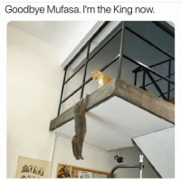 Mufasa, Animal, and Best: Goodbye Mufasa. I'm the King now. Follow our @animalsmeettheinternet page for the best animal content on IG!