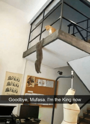 Mufasa, Live, and Long Live: Goodbye, Mufasa. I'm the King now long live the king.