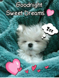 sweet dreams: goodnight  Sweet Dreams