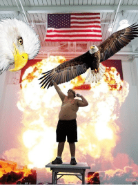 """Google """"Most 'Murican Picture Ever"""" and You Won't Be Disappointed: Google """"Most 'Murican Picture Ever"""" and You Won't Be Disappointed"""