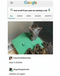 Google, Memes, and News: Google  Q how to tell if your pets are starting a cult  AL. VIDEOS NEWS MAGES  SHOPPING  @chaos.reigns  truecrimefalsecrime  stop it charles  disgustinganimals  charles not again we talked about this charles (👉@chaos.reigns_ follows appreciated)