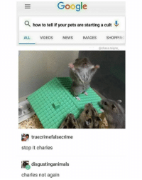Funny, Google, and News: Google  Q how to tell if your pets are starting a cult  ALL  VIDEOS  NEWS  IMAGES  SHOPPING  @chaos.reigns  truecrimefalsecrime  stop it charles  disgustinganimals  charles not again Not again😫 Via @chaos.reigns_