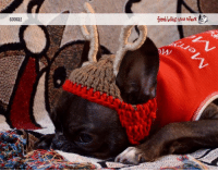 """Google, Memes, and Calendar: GOOGLE  rescue network Our 2017 calendars are ready and they're a PAWSOME gift for the frenchie lover in your life! Use """" CYBRWEEKSALE"""" for 50% (!!!) off: www.zazzle.com/frenchbulldogrescue/products"""