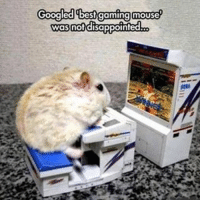 Disappointed, Internet, and Lmao: Googled best gaming mouse  was not disappointed Have to for the man snoop 😏🍁 Night homies 💤 - Been following for a bit? Turn on my notifications for a quick laugh 👍🏼 Backup- @memerzone - Tags (Ignore) 🚫 GamingPosts CallOfDuty Memes Cod JustinBieber Gaming Tumblr FunnyPosts Xbox LMAO Playstation XboxOne Internet TwitterPosts CSGO Gamer SelenaGomez Follow Meme InfiniteWarfare Spongebob Like YouTube Relatable Like4Like DankMemes