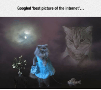 Internet, Best, and The Internet: Googled 'best picture of the internet'... <p>I Found It Guys.</p>