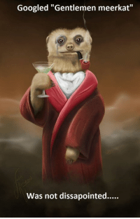 "Google, Memes, and Meerkat: Googled ""Gentlemen meerkat""  Was not dissapointed..... #CFPics #funny"