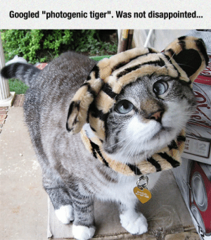 "Disappointed, Tumblr, and Blog: Googled ""photogenic tiger"". Was not disappointed.. srsfunny:Photogenic Tiger"