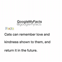 Facts, Future, and Love: GoogleMyFacts  Kagooglemy facts  Facts  Cats can remember love and  kindness shown to them, and  return it in the future. Tag a cat lover 😸