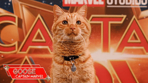 Target, Tumblr, and Blog: GOOSE  CAPTAIN MARVEL pepporpotts:  My favorite celebrity.