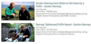 Gordon Ramsay, Word, and Irl: Gordon Ramsay Gets Bitten on the Nose by a  Puffin Gordon Ramsay  The F Word a  Hace 5 años 350,868 vistas  Season 4 of 6 of The F Word with Gordon Ramsay and celebrity cooking  brigades. Gordon is finally able to catch Puffin-he ends  4:03  Ramsay Barbecued Puffin Breast Gordon Ramsay  The F Word 2  Hace 5 años 371,198 vistas  Season 4 of 6 of The F Word with Gordon Ramsay and celebrity cooking  brigades. Gordon gets alfresco cooking and whips up  2:01 Me irl