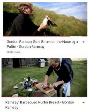 .: Gordon Ramsay Gets Bitten on the Nose by a  Puffin-Gordon Ramsay  389K views  Ramsay Barbecued Puffin Breast Gordon  Ramsay .