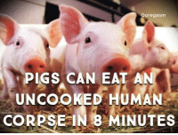"""Tumblr, Blog, and Bully: Goregasm  PIGS CAN EAT AN  UNCOOKED HOMAN  CORPSE IN 8 MINUTES <p><a href=""""https://invisible-bully-40.tumblr.com/post/173213175554/swine-dine"""" class=""""tumblr_blog"""">invisible-bully-40</a>:</p>  <blockquote><p>😨 swine & dine</p></blockquote>"""