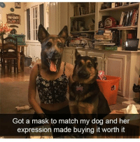 Dogs, Funny, and Match: Got a mask to match my dog and her  expression made buying it worth it Dogs snaps