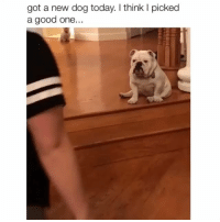 Memes, Good, and Today: got a new dog today. I think I picked  a good one.. What's up bro? 😂 Credit: @bellieofthebeast