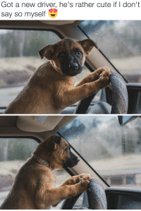 """Animals, Cute, and Target: Got a new driver, he's rather cute if I don't  say so myself <p><a href=""""http://babyanimalgifs.tumblr.com/"""" target=""""_blank"""">baby <b>animals</b> blog</a></p>"""