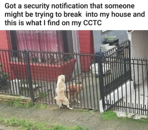 Ambitious 100: Got a security notification that someone  might be trying to break into my house and  this is what I find on my CCTC  UOUC R ER Ambitious 100