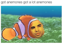 """Target, Tumblr, and Blog: got anemones got a lot anemones <p><a href=""""http://theawesomeadventurer.tumblr.com/post/121964214673/get-this-out-my-got-damn-face"""" class=""""tumblr_blog"""" target=""""_blank"""">theawesomeadventurer</a>:</p>  <blockquote><p>get this out my got damn face</p></blockquote>"""